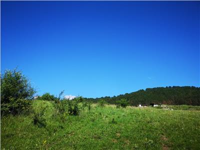 Teren de vanzare cu autorizatie - Floresti
